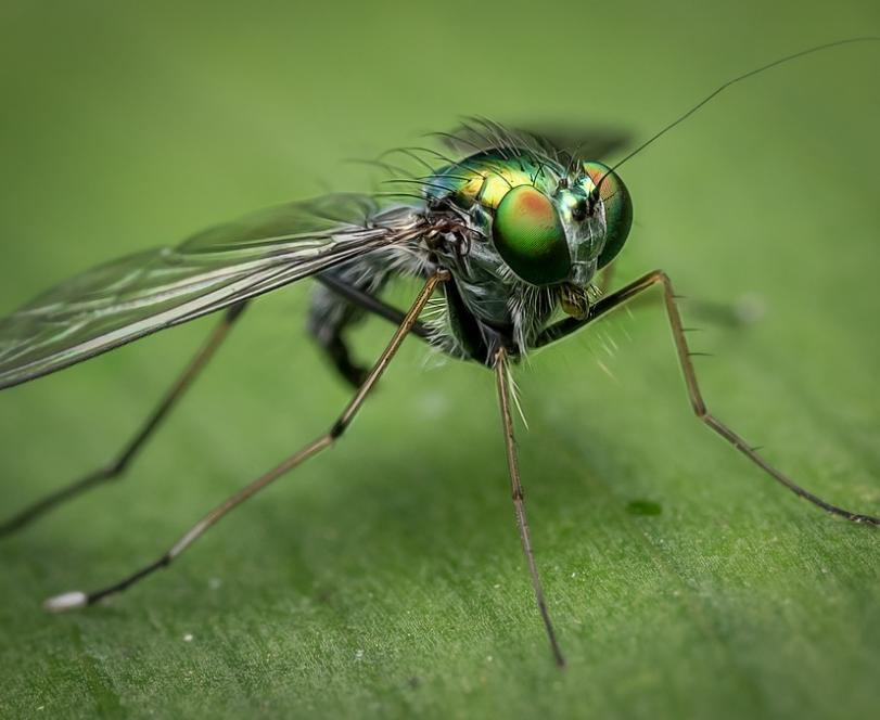 un insecte